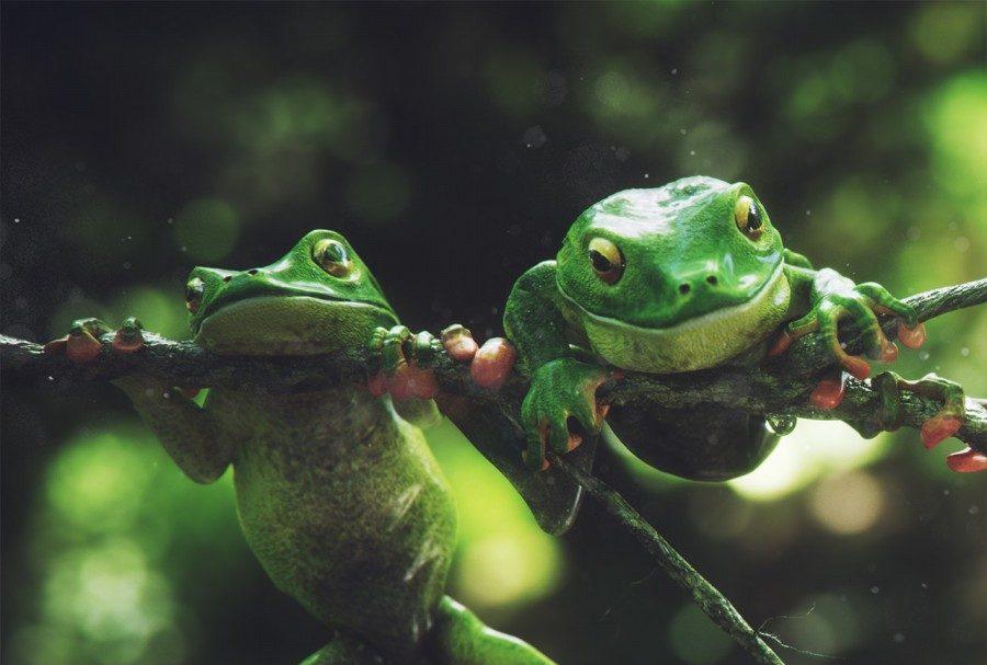 frog brorhers örnek resim